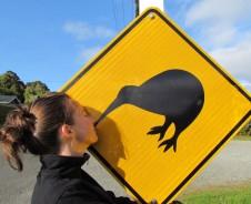 Kiwis auf Stewart Island