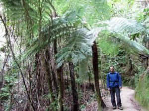 Üppige Baumfarne entlang des Abel Tasman Coast Track