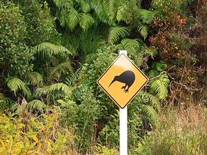 Kiwi Schild