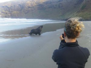 Tierbeobachtungstour ab Dunedin