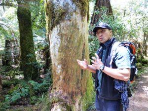 Maori Guide im Whirinaki Forest