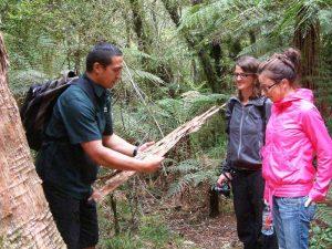 Maori-Guide im Whirinaki Forest