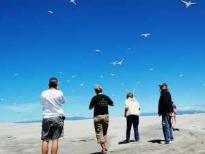 Riesige Vogelkolonien an der Golden Bay