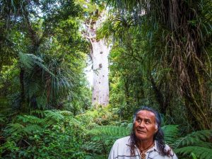 Maori im Wald an der Kauri Coast