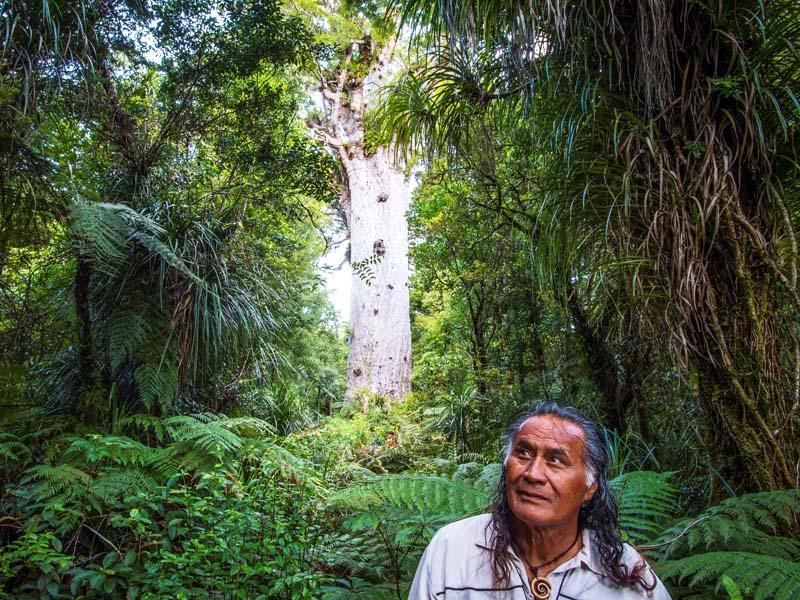 Maori im Wald an der Kauri Coast in Neuseeland