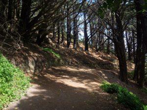 Ein Weg im Mount Victoria Park - Herr der Ringe Drehorte