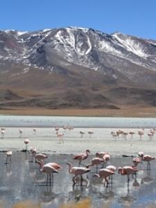 reisebricht-flamingos
