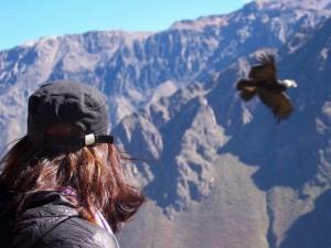 Kondore beobachten im Colca Canyon