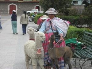Frau mit Lamas an der Leine
