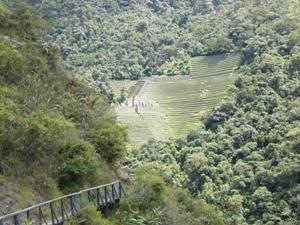 Ruinen im Dschungel