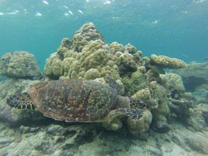 Rondreis Sri Lanka en Malediven - snorkelen