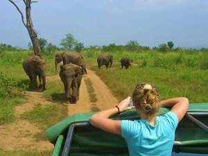 Yala National Park - Jeepsafari