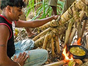 Tangalle Sri Lanka - koken