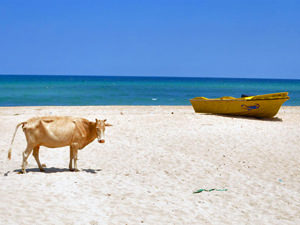 Sri Lanka oostkust - strand