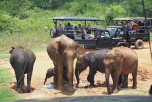 Sri Lanka - Udawalawe jeeps