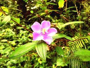 Bloem Sinharaja Sri Lanka