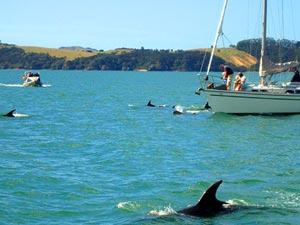 oog in oog met dolfijn