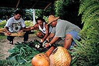 Maori mannen nieuw zeeland