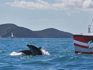 Nieuw Zeeland reis Bay of Islands dolfijnentocht