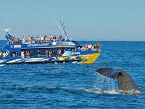 Nieuw Zeeland reis walvissen spotten