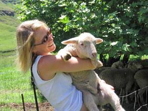 Nieuw Zeeland reis schapen
