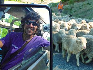 rondreis nieuw zeeland schapen