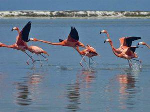 flamingo garnalen eten mexico