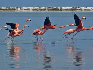 flamingo rio celestun mexico