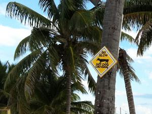 Verkeersbord - Caye Caulker Belize