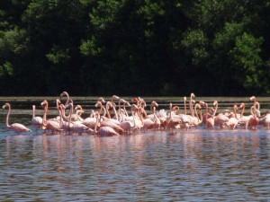 flamingos-mexico-met-kinderen