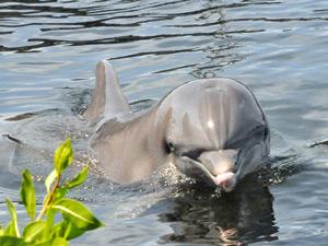 Ein Delfin ganz nah am Ufer