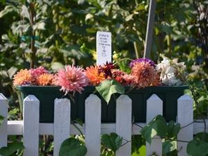 Ein Blumenkasten am Gartenzaun