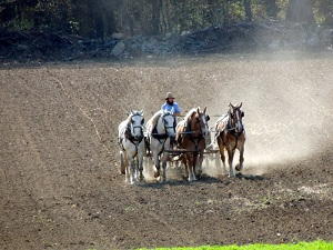 Farmer mit Pferden