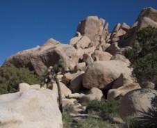 Joshua Tree – Ausflug in die Mojave Wüste