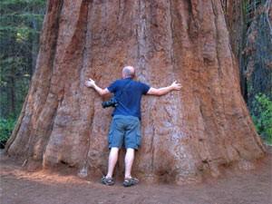 usa-westen-sequoia-riesige-baum-umarmen