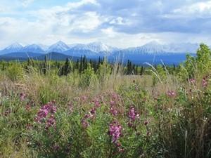 Bergipfel und grüne Wiesen im Yukon Territorium