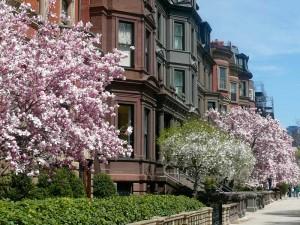 usa-osten-boston-commonwealth-avenue