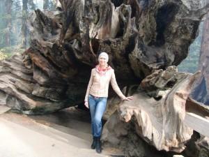 Riesenbäume im Sequoia