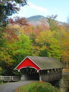 Brücke umgeben von Wäldern