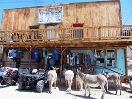 Esel vor einer alten Westernbar