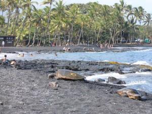 Schildkröten am schwarzen Strand
