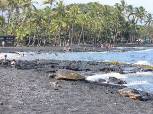 hawaii-bigisland-punaluu-schildkroete-schwarzer-strand