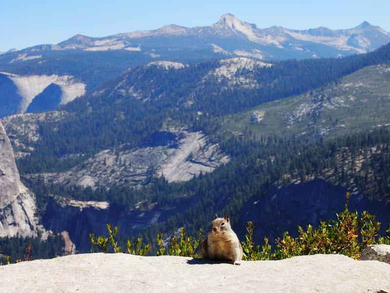 Tier im Yosemite Nationalpark