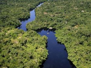 Ein Fluss im Dschungel von oben