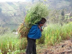 Traditionelle Erntearbeit