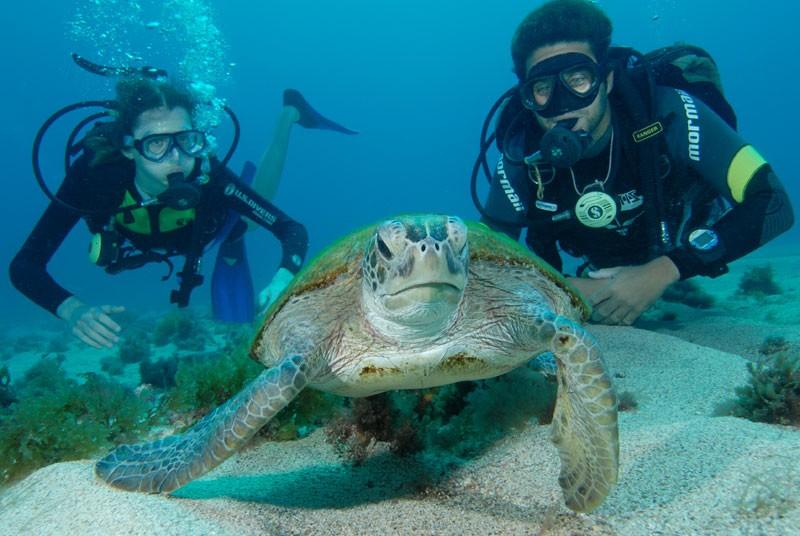 Brasilien Reisen Schildkröten Tauchen Schnorcheln