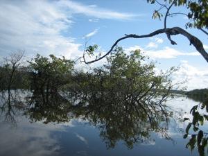 Himmel und Büsche spiegeln sich im Wasser