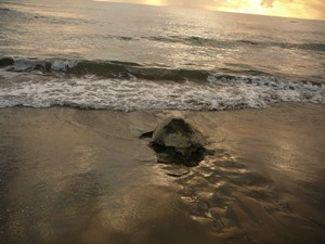 Bahias Schildkrötenstrand