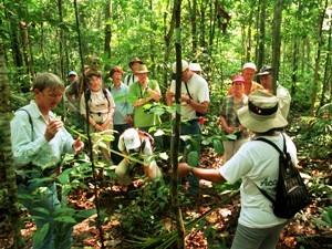 Pflanzen und Tiere entdecken im Dschungel