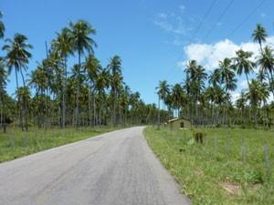 brasilien-linha-verde-palmen-straße-mietwagen